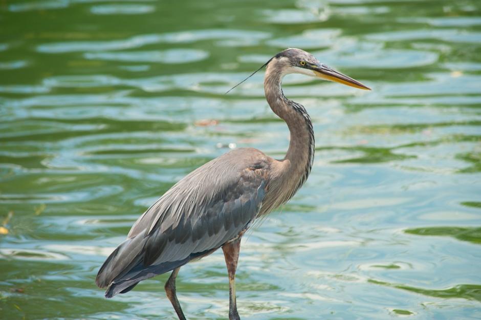 anna maria island wildlife preserves
