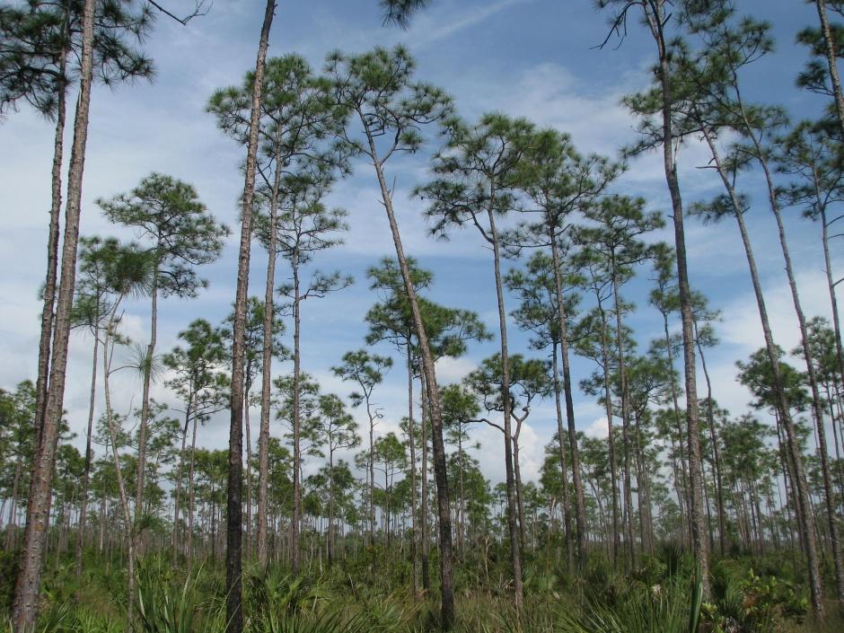anna maria island nature preserve