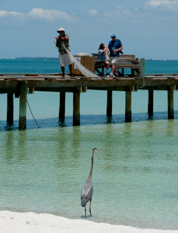 The ultimate guys getaway on anna maria island for Anna maria island fishing report