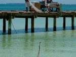 tips for fishing on anna maria island