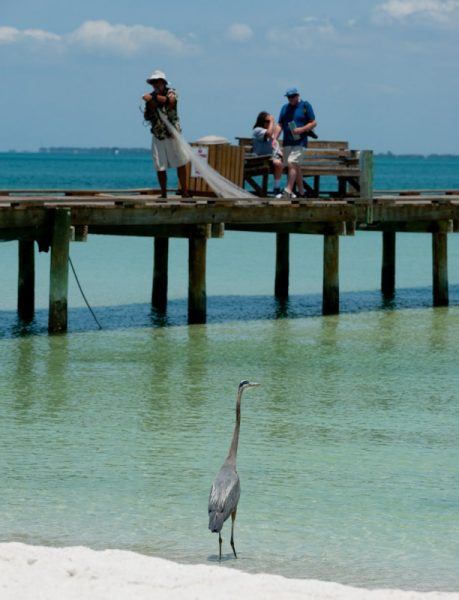 tips for pier and surf fishing on anna maria island