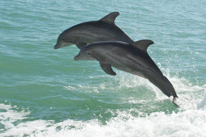 dolphin tour anna maria