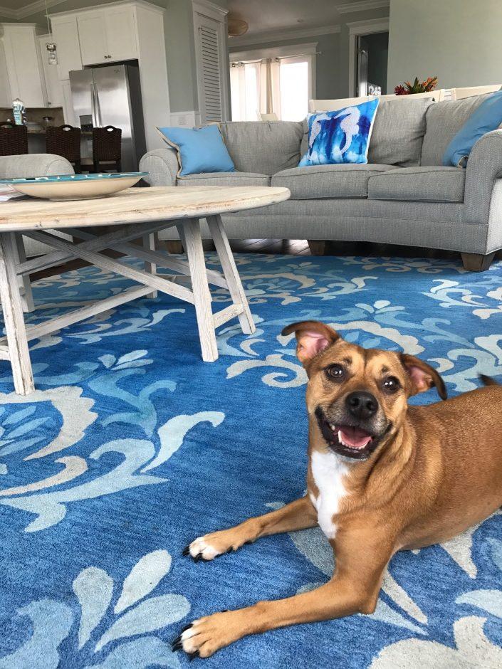 dog friendly vacation rentals anna maria